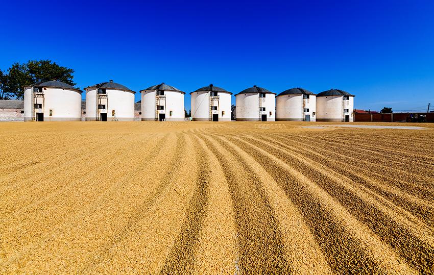 水源大米生产基地